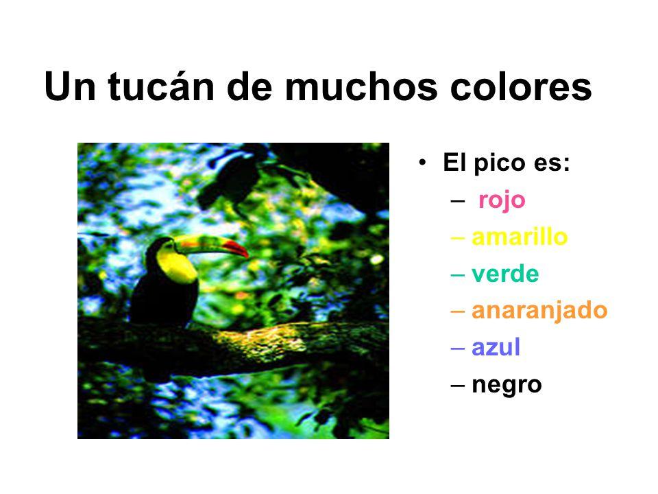 Un tucán de muchos colores