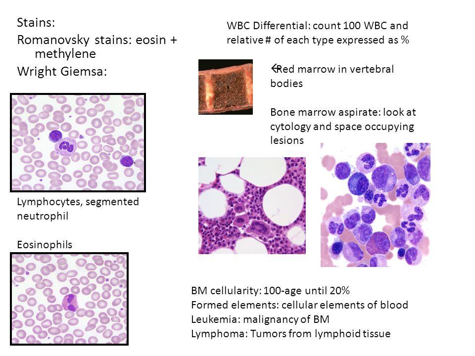 Stains: Romanovsky stains: eosin + methylene Wright Giemsa: