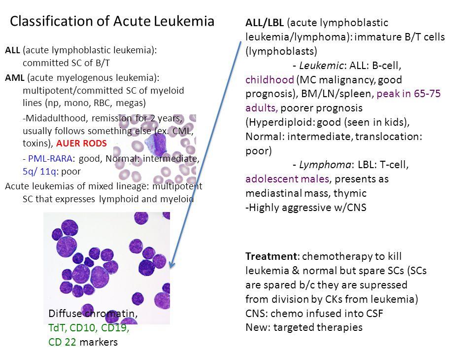 Classification of Acute Leukemia