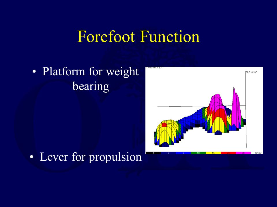Platform for weight bearing