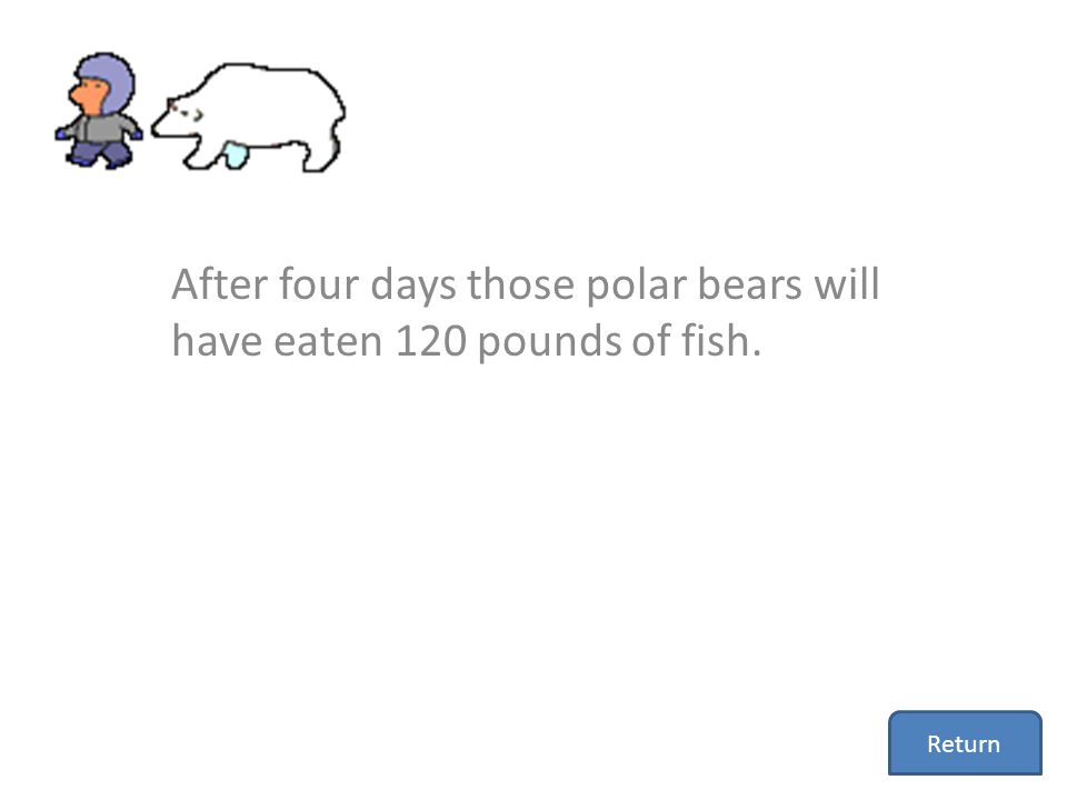 After four days those polar bears will have eaten 120 pounds of fish.