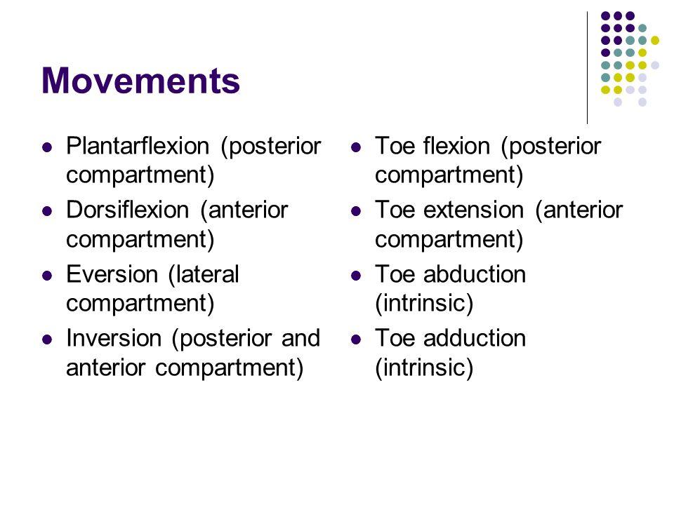 Movements Plantarflexion (posterior compartment)