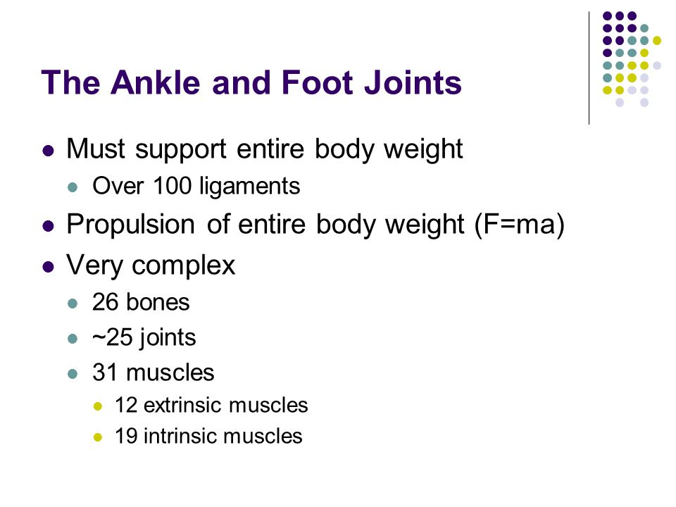 The Ankle and Foot Joints