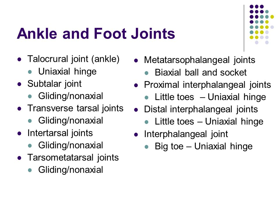 Ankle and Foot Joints Talocrural joint (ankle)
