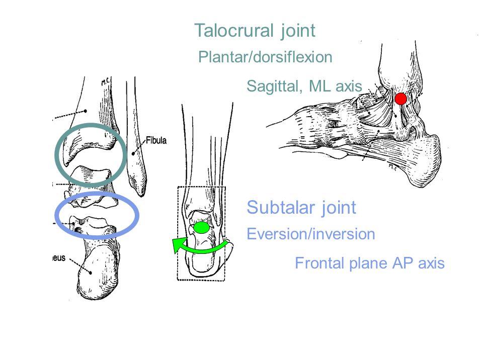 Talocrural joint Subtalar joint Plantar/dorsiflexion Sagittal, ML axis