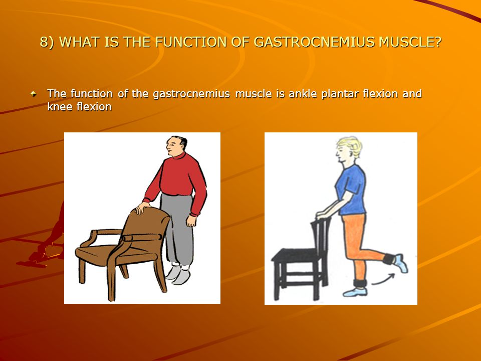 8) WHAT IS THE FUNCTION OF GASTROCNEMIUS MUSCLE