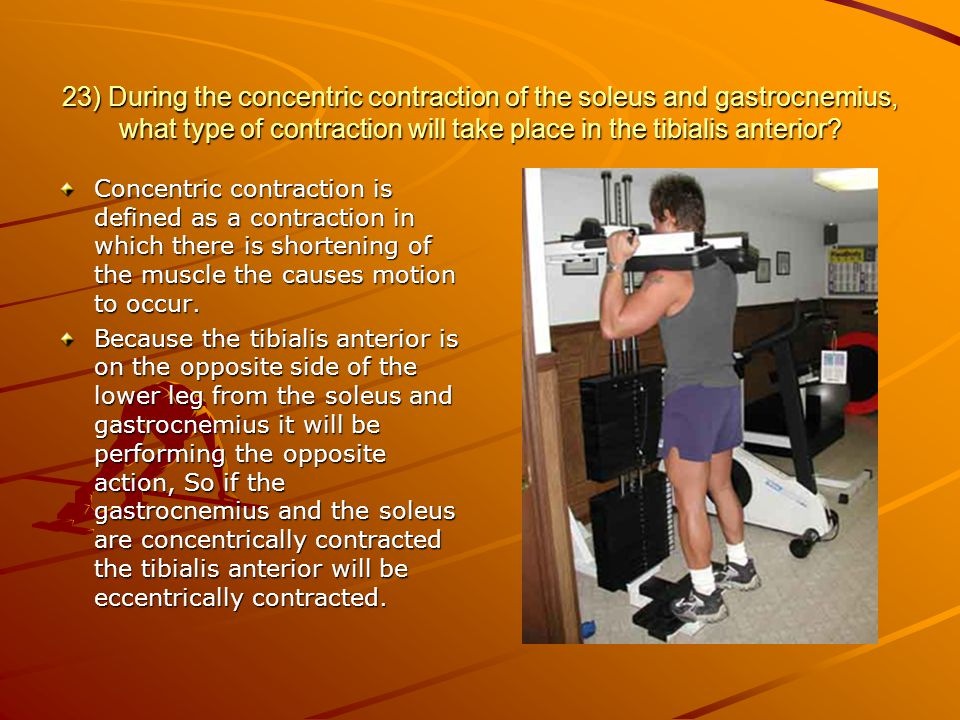 23) During the concentric contraction of the soleus and gastrocnemius, what type of contraction will take place in the tibialis anterior