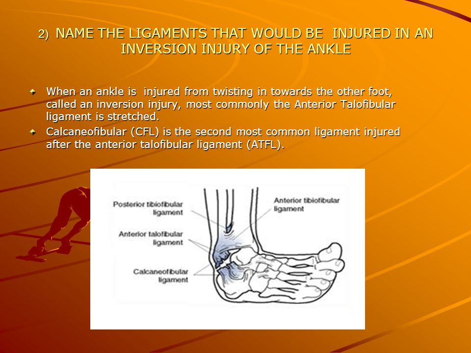 2) NAME THE LIGAMENTS THAT WOULD BE INJURED IN AN INVERSION INJURY OF THE ANKLE