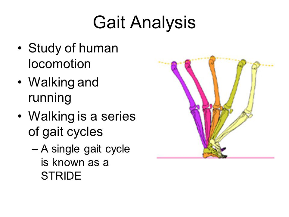 Gait Analysis Study of human locomotion Walking and running