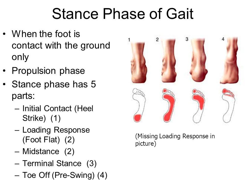 Stance Phase of Gait When the foot is contact with the ground only