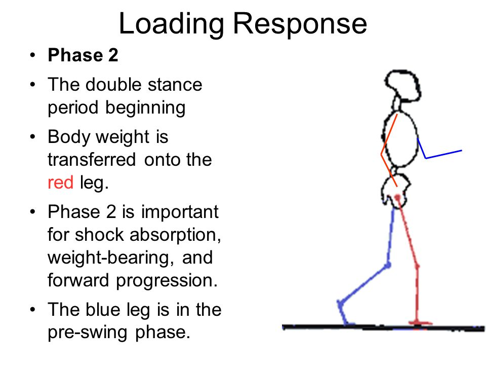 Loading Response Phase 2 The double stance period beginning