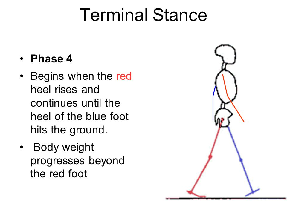 Terminal Stance Phase 4. Begins when the red heel rises and continues until the heel of the blue foot hits the ground.