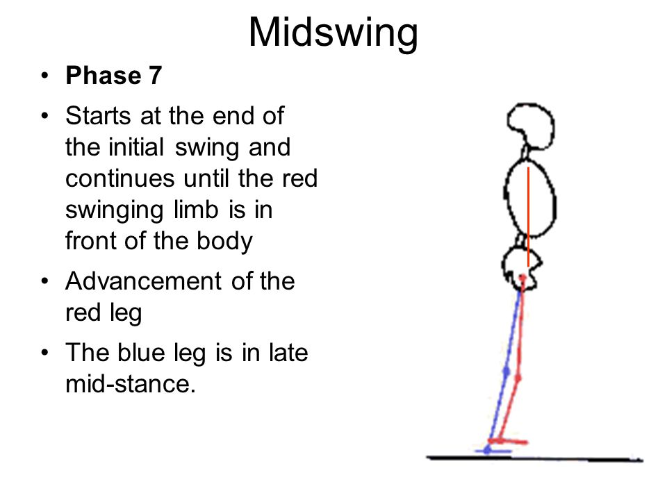 Midswing Phase 7. Starts at the end of the initial swing and continues until the red swinging limb is in front of the body.