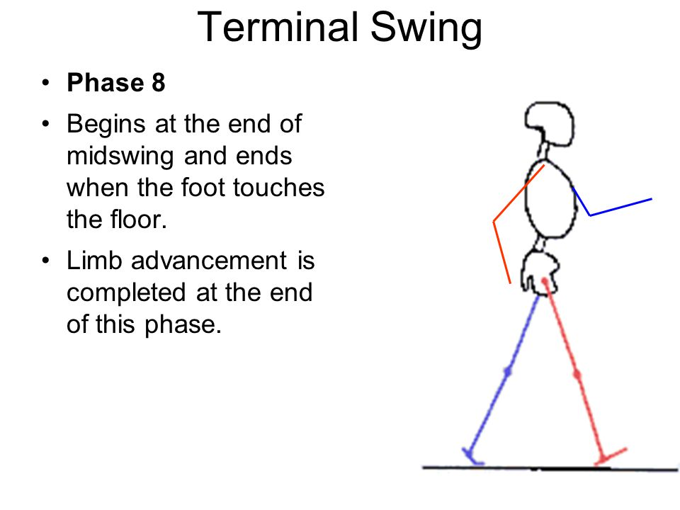Terminal Swing Phase 8. Begins at the end of midswing and ends when the foot touches the floor.