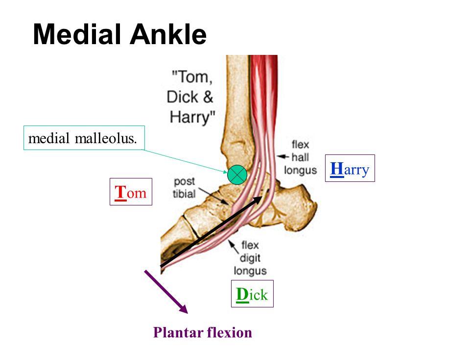 Medial Ankle medial malleolus. Harry Tom Dick Plantar flexion