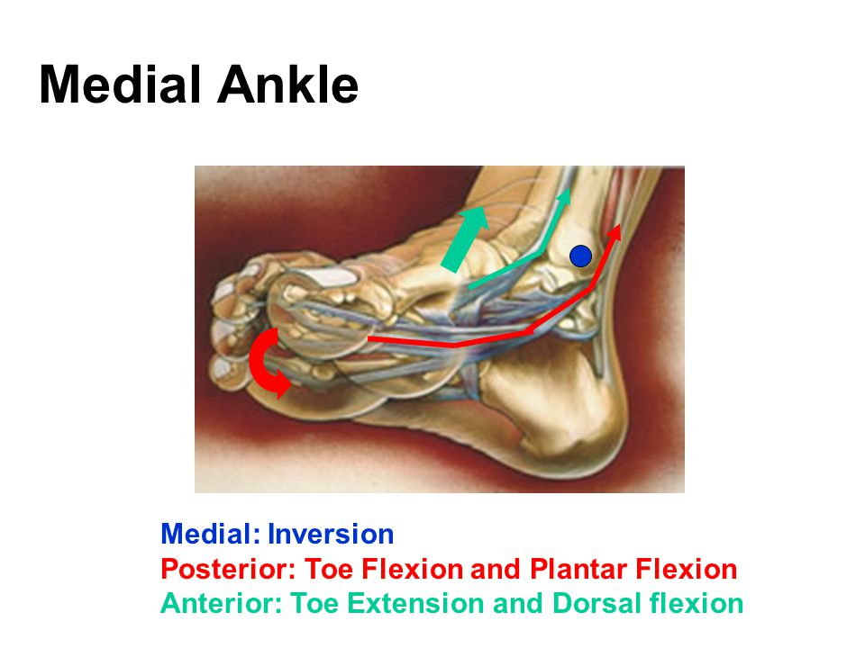 Medial Ankle Medial: Inversion