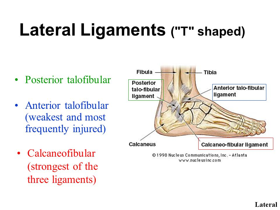 Lateral Ligaments ( T shaped)