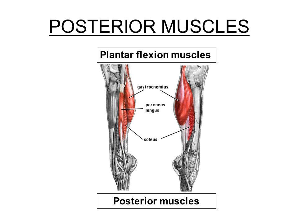 POSTERIOR MUSCLES Plantar flexion muscles Posterior muscles