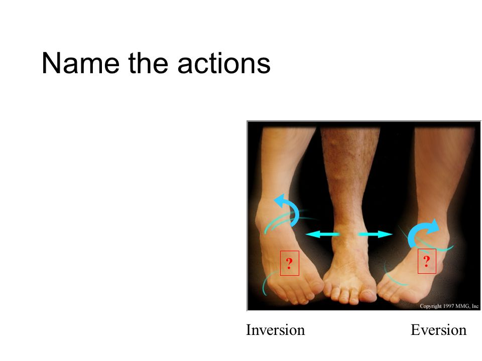 Name the actions Inversion Eversion