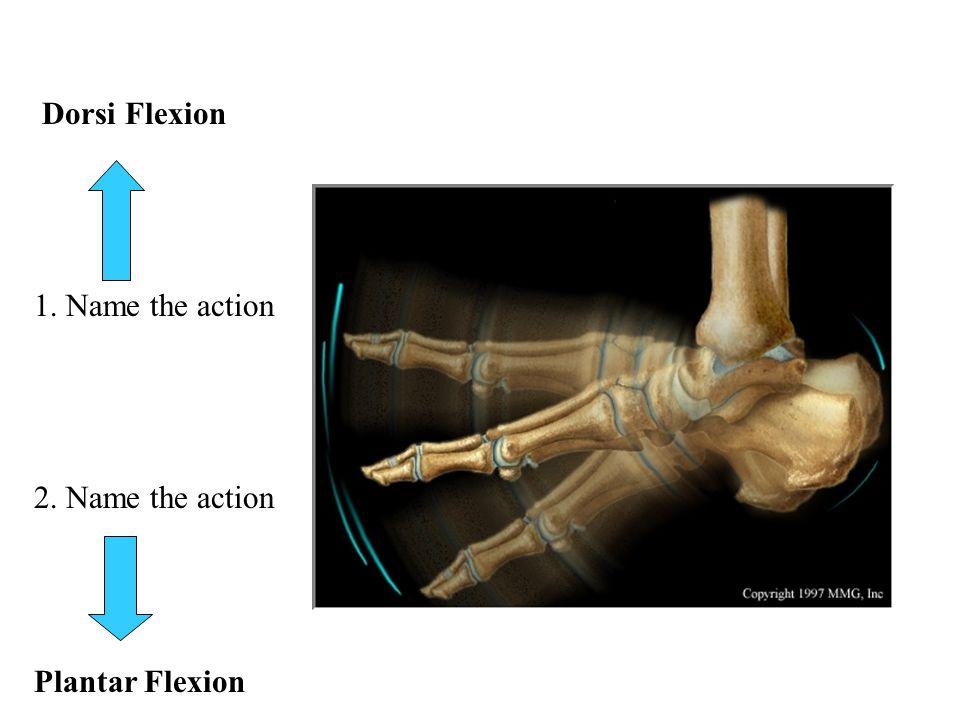 Dorsi Flexion 1. Name the action 2. Name the action Plantar Flexion