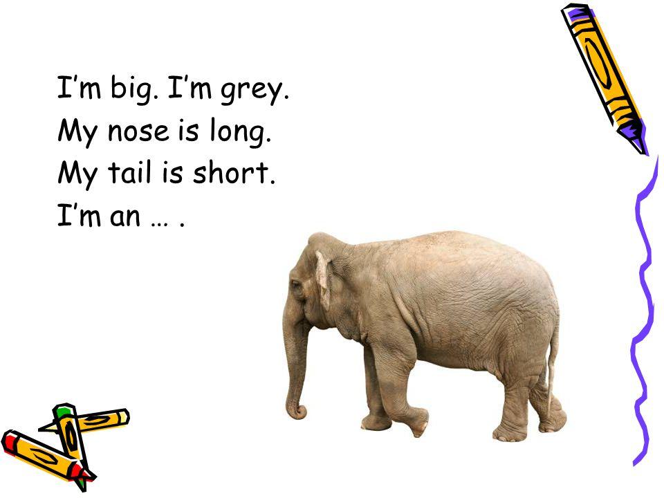 I'm big. I'm grey. My nose is long. My tail is short. I'm an … .