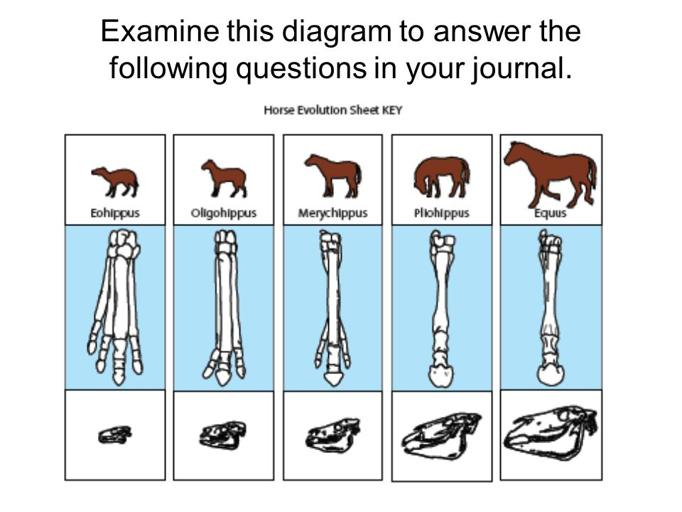 Examine this diagram to answer the following questions in your journal.