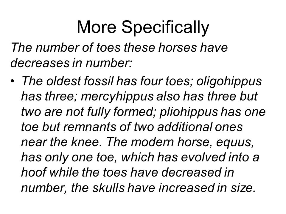 More Specifically The number of toes these horses have decreases in number: