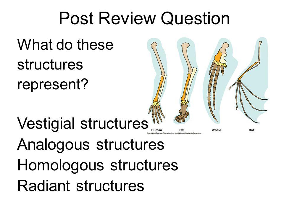 Post Review Question Vestigial structures Analogous structures