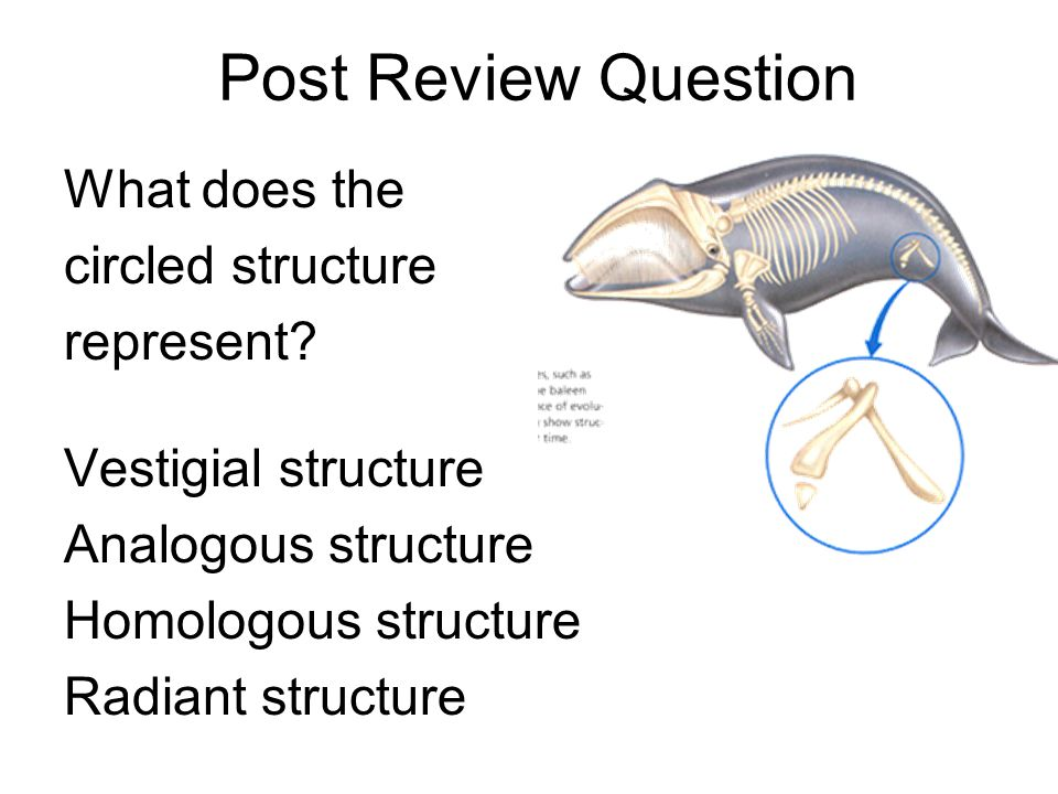 Post Review Question What does the circled structure represent