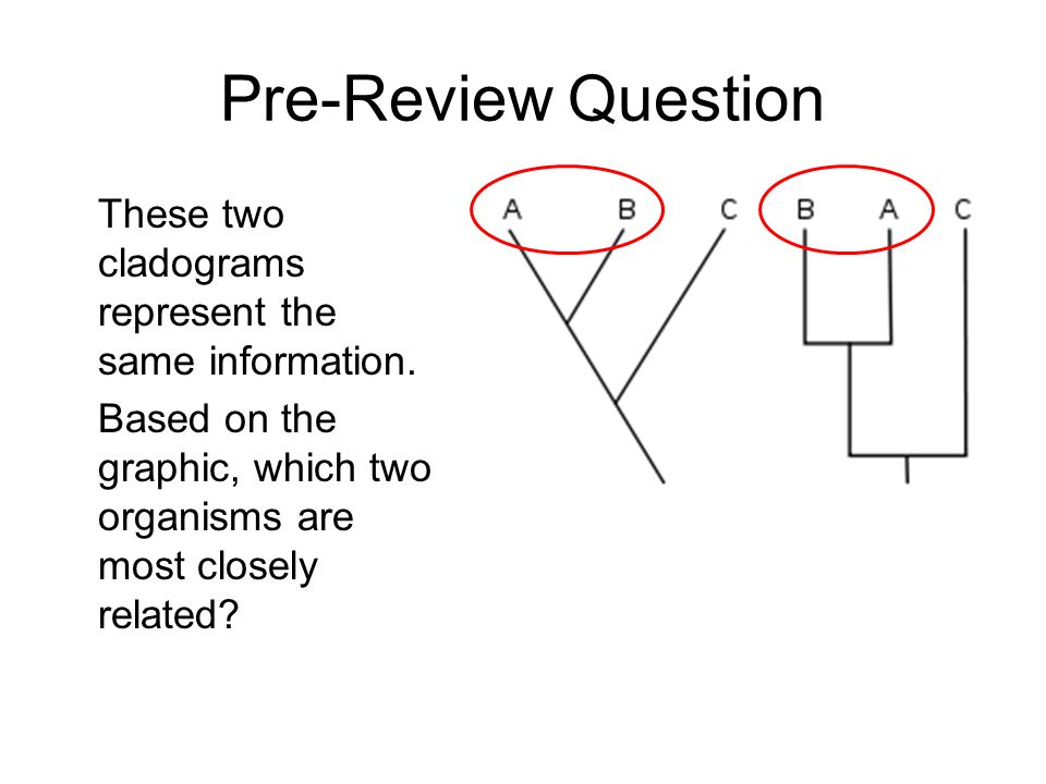 Pre-Review Question These two cladograms represent the same information.