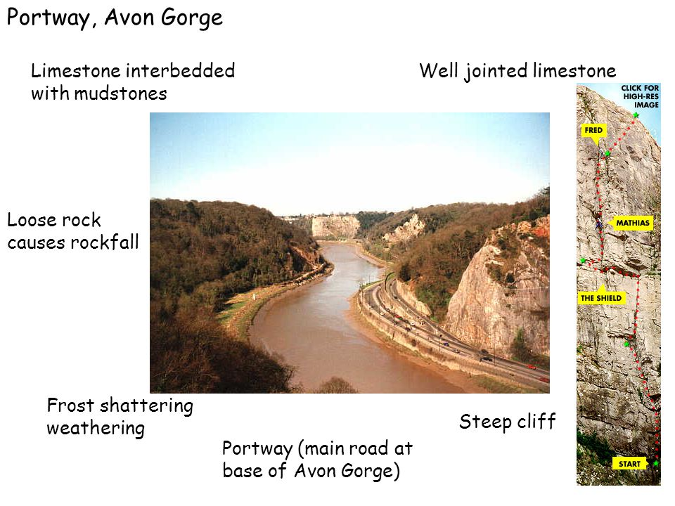 Portway, Avon Gorge Limestone interbedded with mudstones