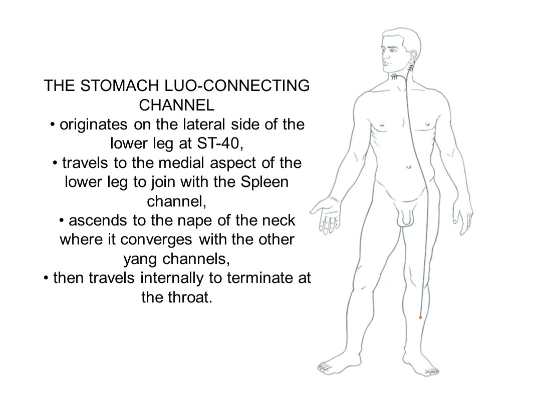 THE STOMACH LUO-CONNECTING CHANNEL