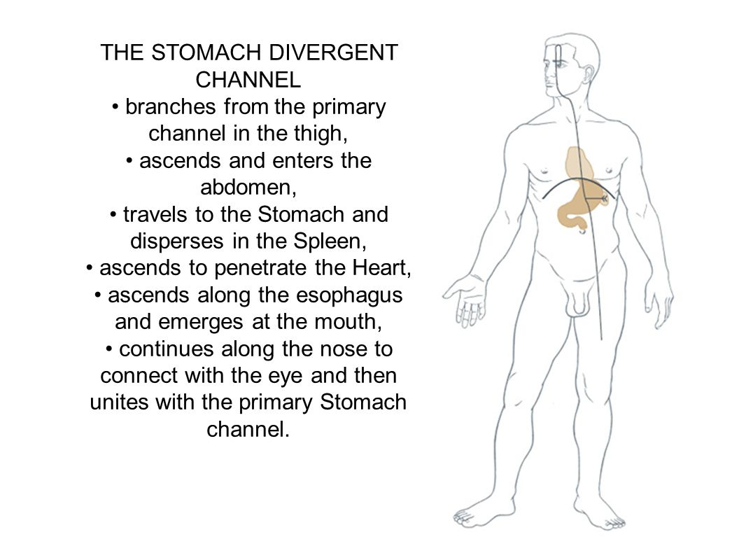 THE STOMACH DIVERGENT CHANNEL