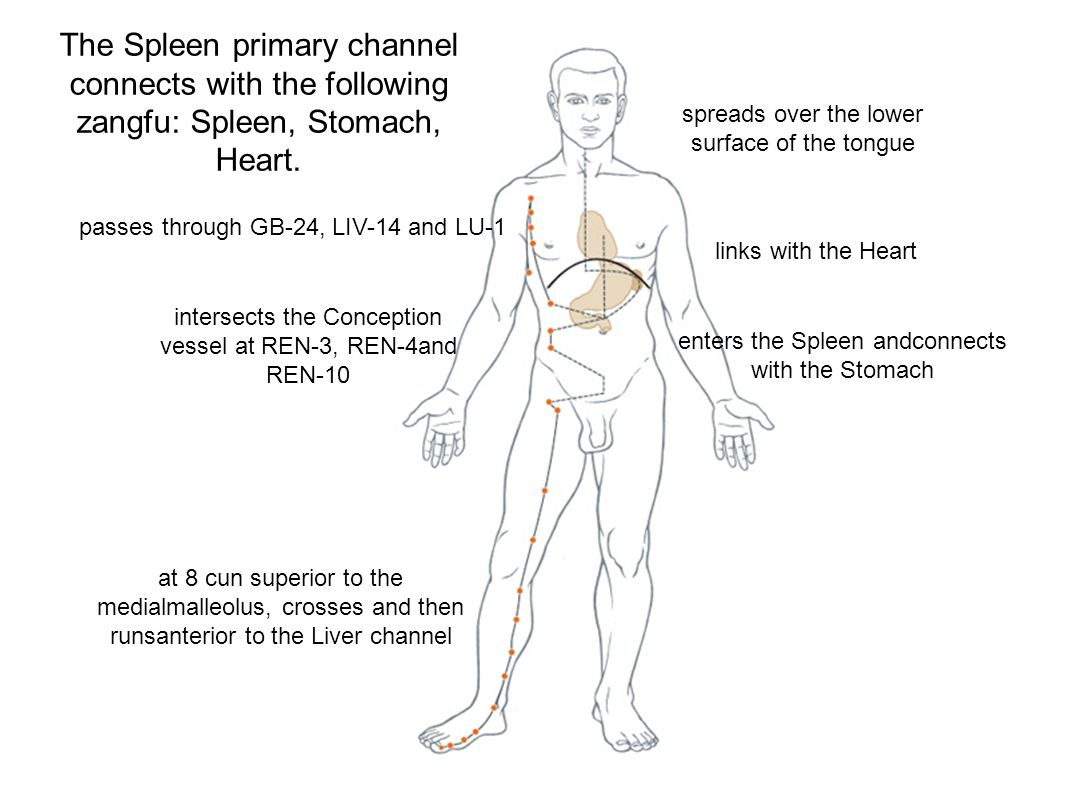 The Spleen primary channel connects with the following zangfu: Spleen, Stomach, Heart.