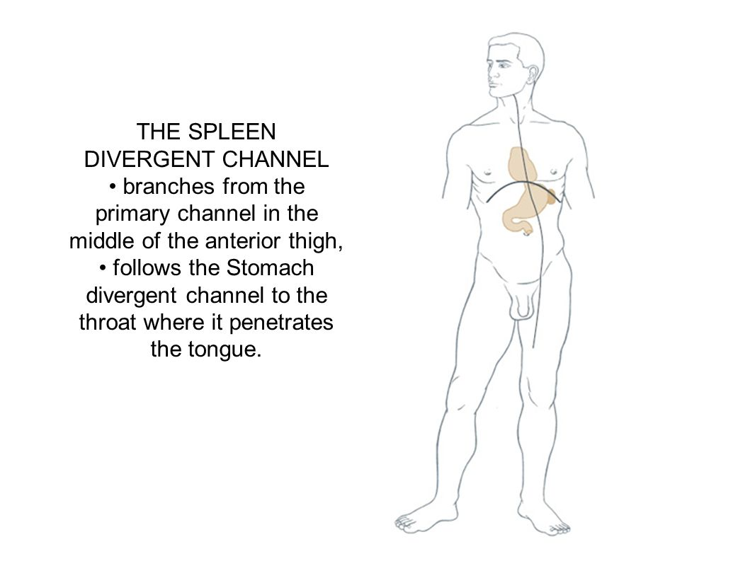 THE SPLEEN DIVERGENT CHANNEL