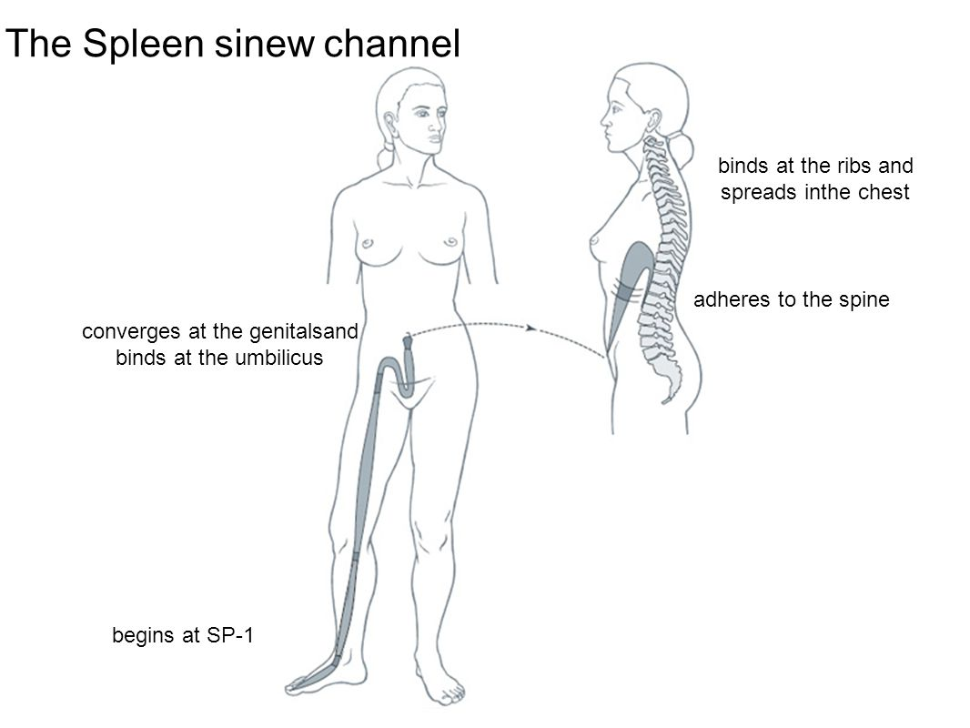 The Spleen sinew channel