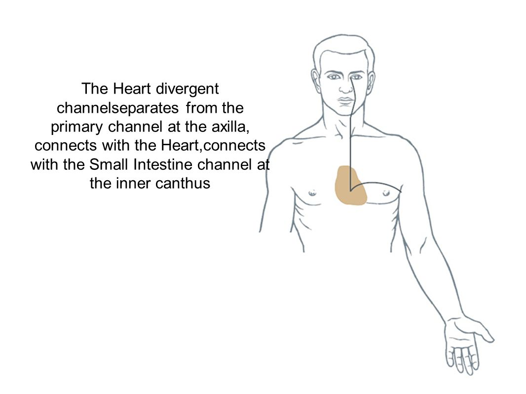 The Heart divergent channelseparates from the primary channel at the axilla, connects with the Heart,connects with the Small Intestine channel at the inner canthus