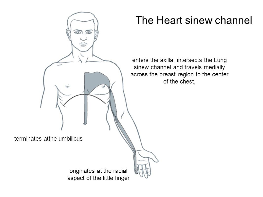 The Heart sinew channel