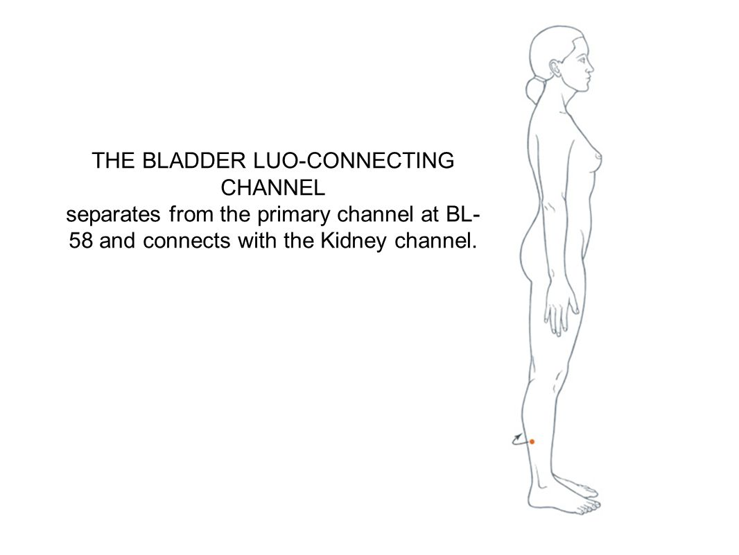 THE BLADDER LUO-CONNECTING CHANNEL