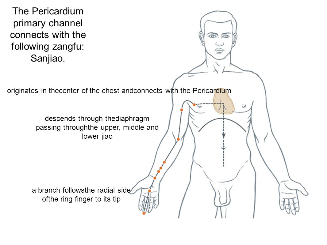 The Pericardium primary channel connects with the following zangfu: Sanjiao.