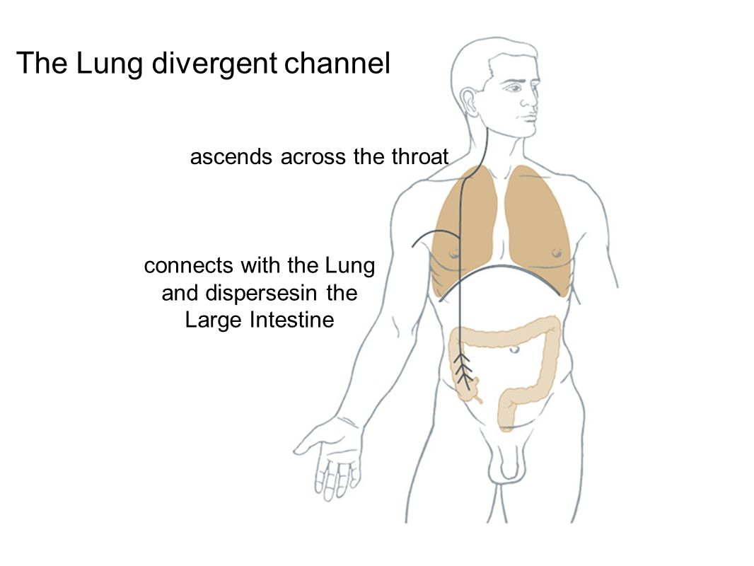 The Lung divergent channel