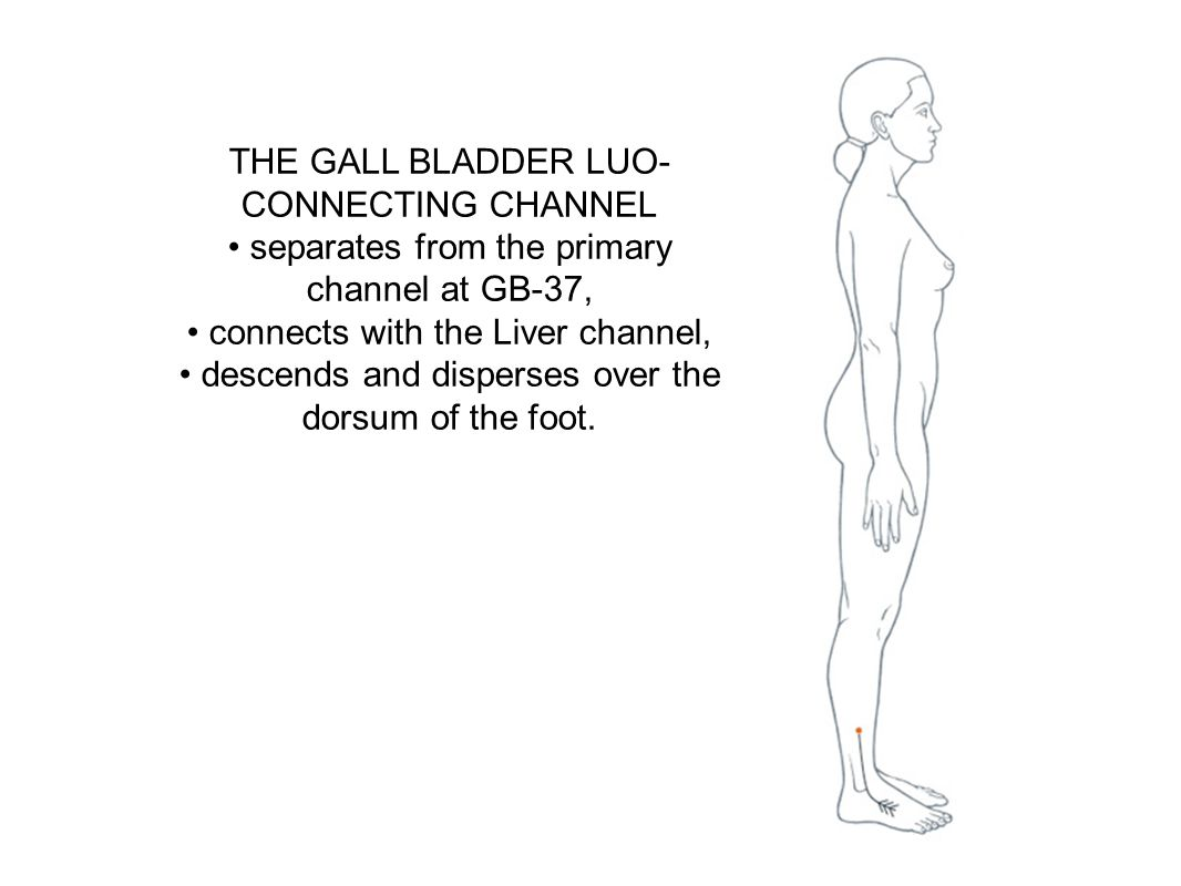 THE GALL BLADDER LUO-CONNECTING CHANNEL