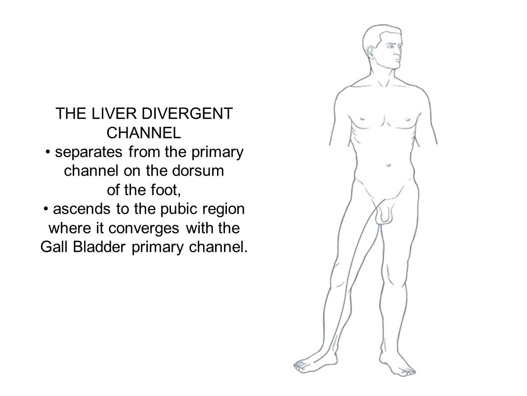 THE LIVER DIVERGENT CHANNEL