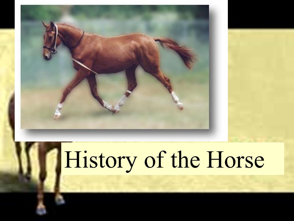 History of the Horse