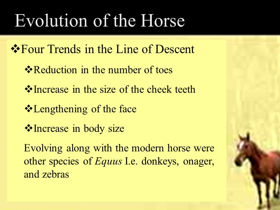 Evolution of the Horse Four Trends in the Line of Descent