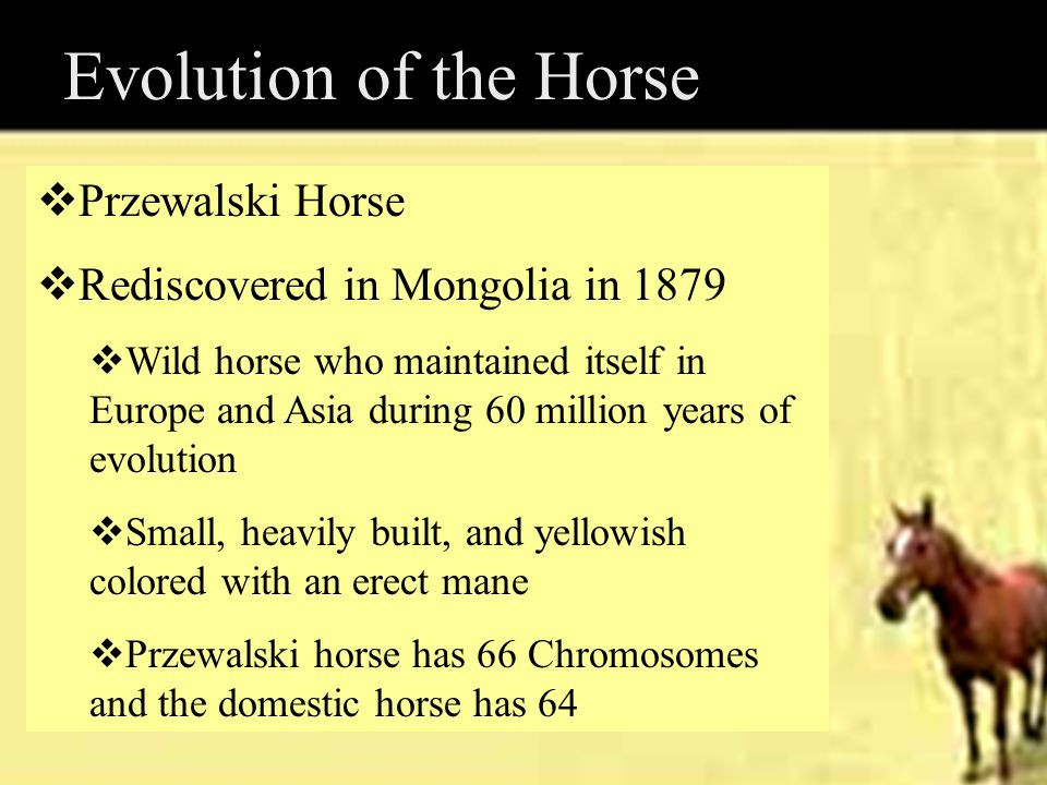 Evolution of the Horse Przewalski Horse
