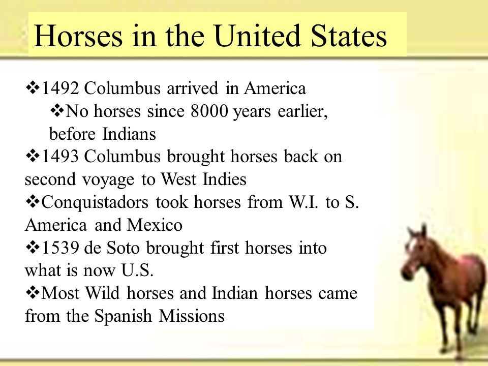 Horses in the United States