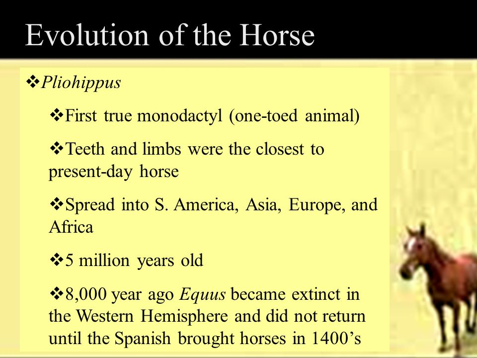 Evolution of the Horse Pliohippus