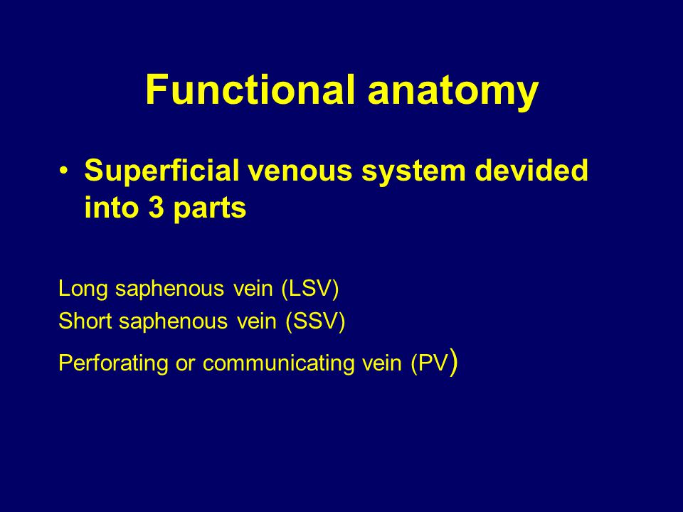 Functional anatomy Superficial venous system devided into 3 parts