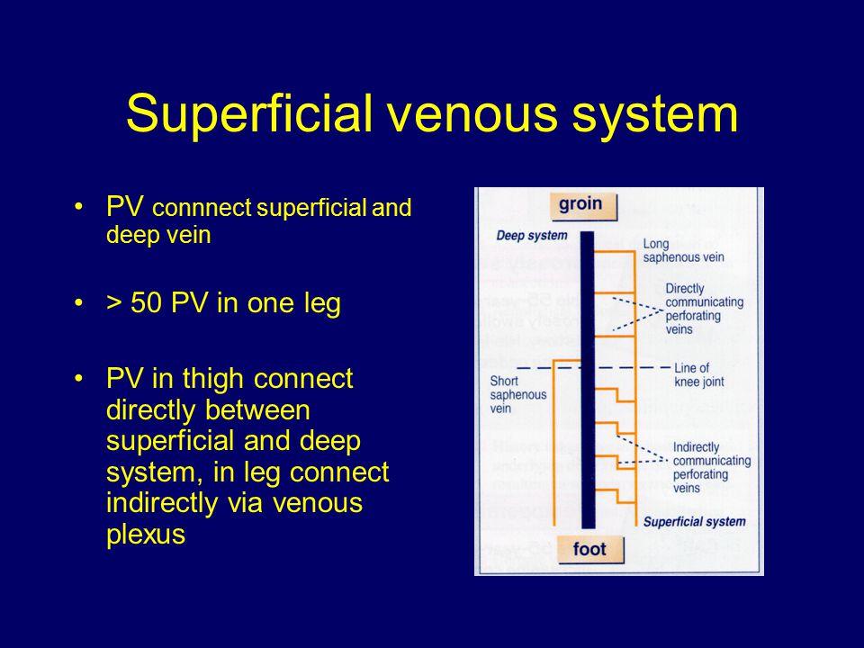 Superficial venous system